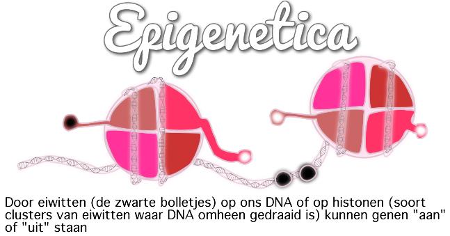 Epigenetica & voeding